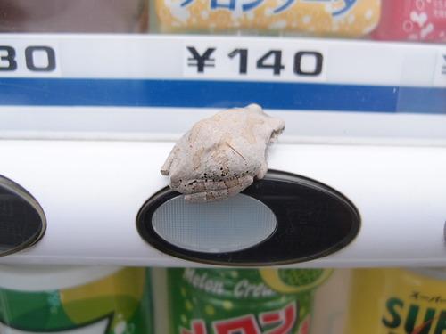 カエル 自動販売機