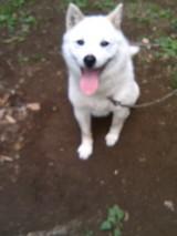 080704ボンゴ犬