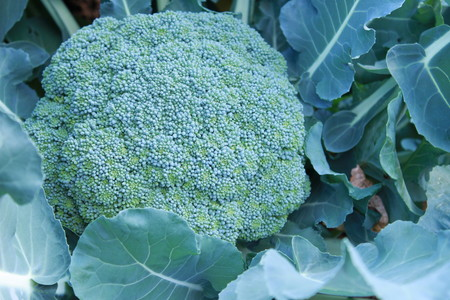 15収穫物 (3)