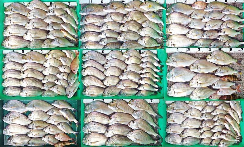 20170805_fish