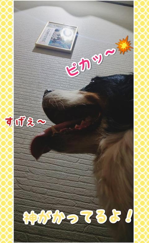 CollageMaker_20200725_060952748