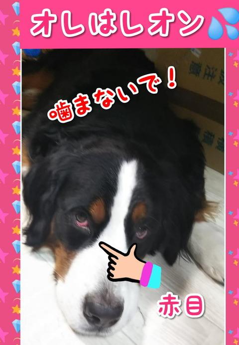 CollageMaker_20191023_201124606