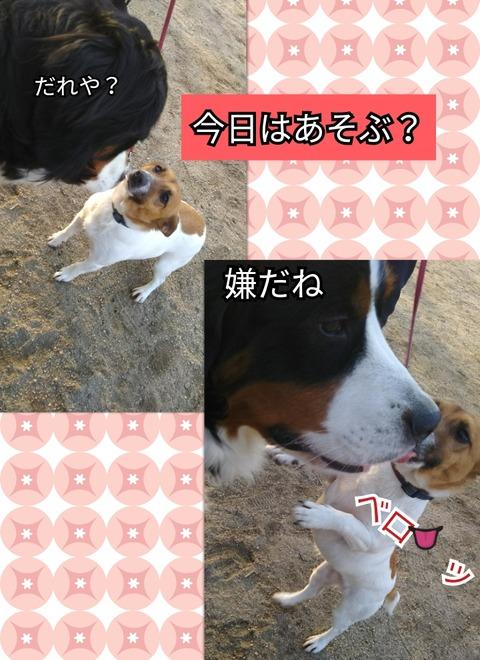 CollageMaker_20190323_100118240