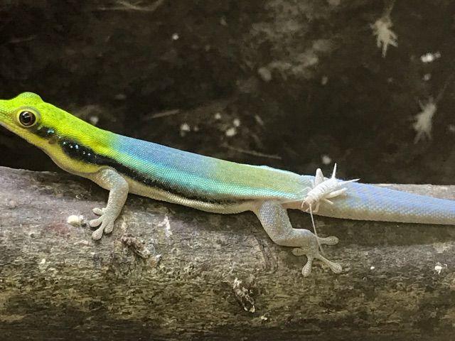 冬眠 カナヘビ カナヘビが冬眠に失敗する原因と成功させるためのコツについて