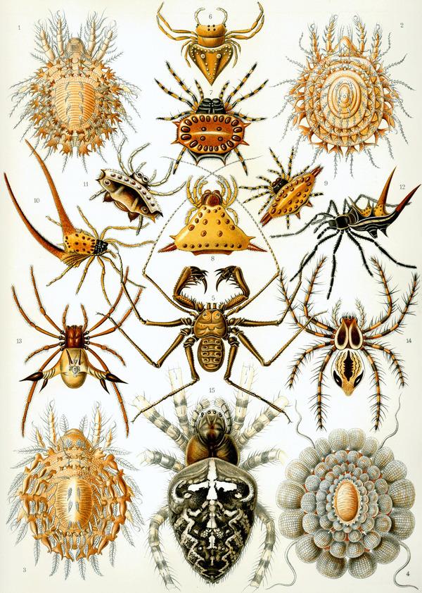 様々なクモ綱