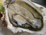 的矢産牡蠣