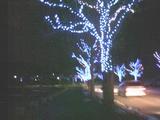 金沢の街灯