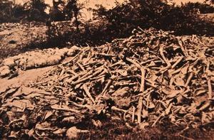 キリングフィールドから掘り出された遺骨 4