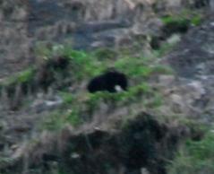 ラマホテルの裏の崖に出現したクマ