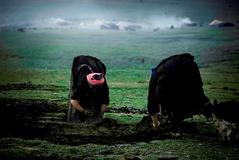 チベット 写真 野田雅也