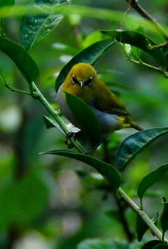 ダラムサラの鳥3