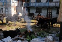 ランタン村の朝