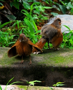 ダラムサラの鳥1