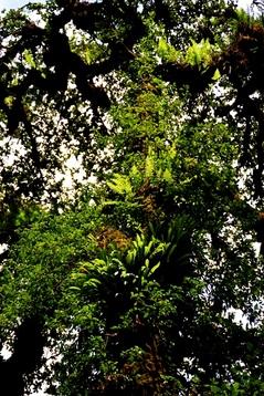 一本の木にも沢山の同居植物2