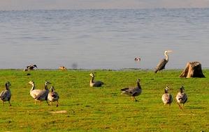 Pong Wetland