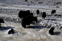 川を渡るヤーの家族