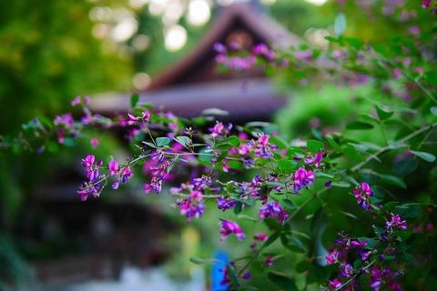 141019_秋風は疾く疾く吹き来萩の花.jpg