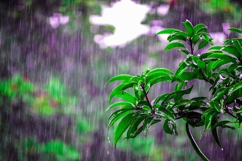 200716_五月雨のつづける年のながめには.jpg
