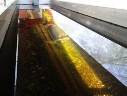 下には、肥料となるフンをする金魚たちが!