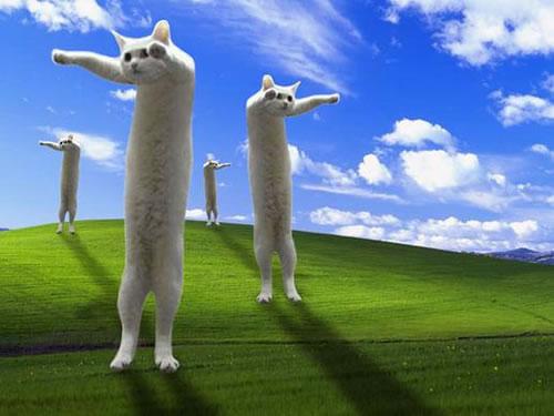 7-a-long-cat06