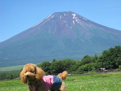 富士山ココちゃん
