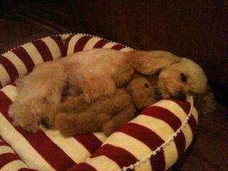 ミルクちゃんクマちゃんと寝んね