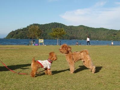ここあちゃん琵琶湖にて
