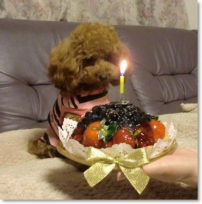 Rubyちゃん1才Birthday