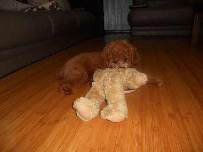 sora with teddy bear