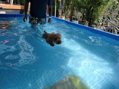 チャオ君遊泳中