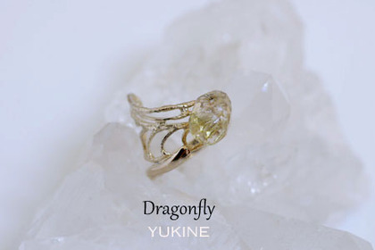 dragonfly_bn