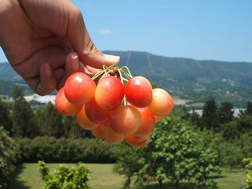 cherry-p3