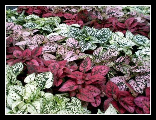 plants-p