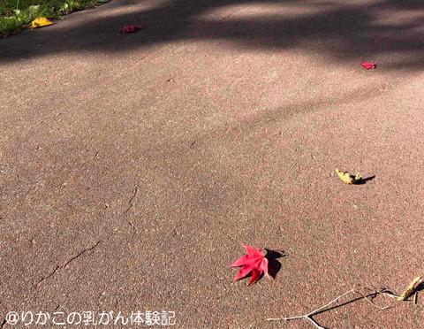 2019/10/16 がんサロン ②