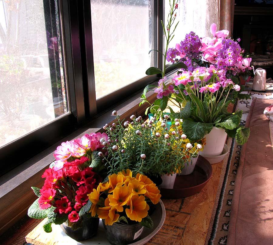 B100218室内花