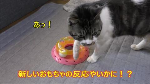 1猫の気持ちのおもちゃで遊ぶ