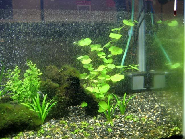 藻類をできる限り落とす!!