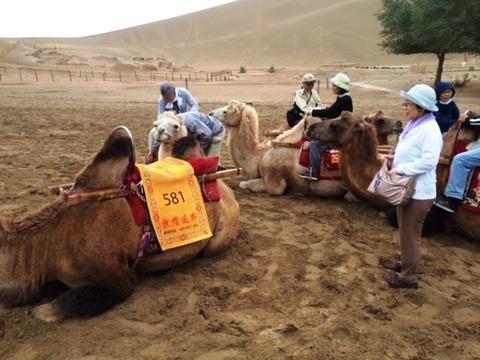 Camel_Ride_02