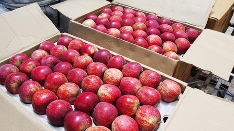 リンゴ販売2