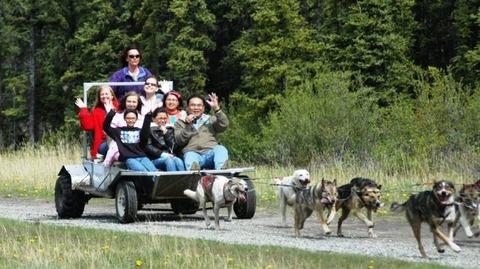 Dog_Cart