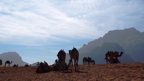 景色4 ラクダ