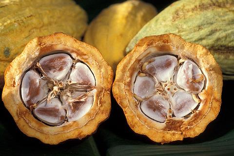 Cacao_03