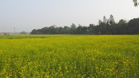 Bangladesh_flower