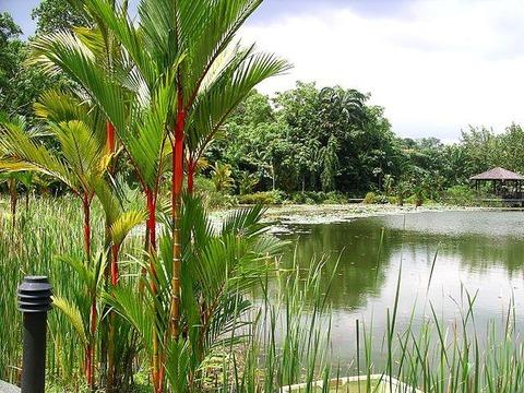 Singapore_Botanic_Gardens_02