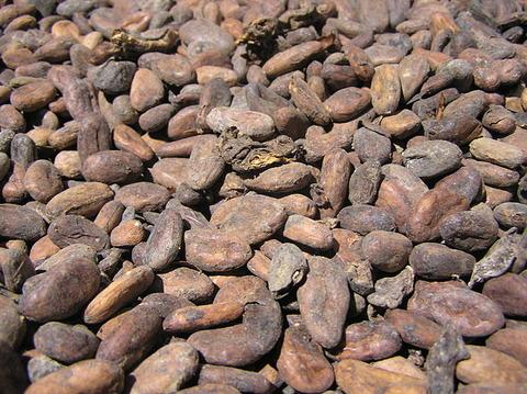 Cacao_02