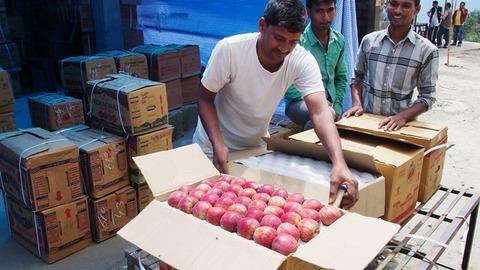 リンゴ販売