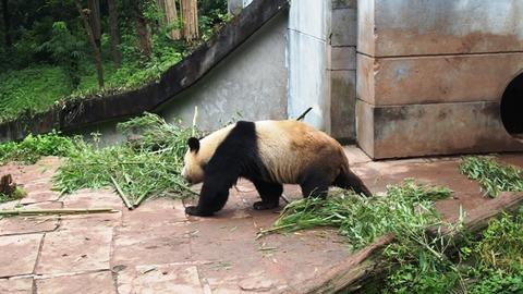 Panda_05