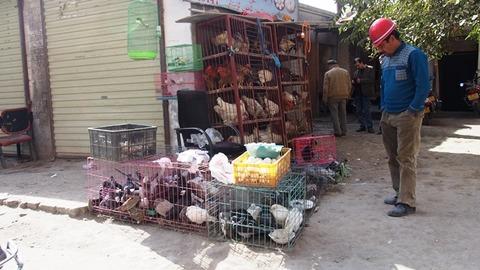 ヤルカンド 鳥販売
