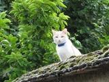 サントネィの猫