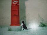 ポストと猫